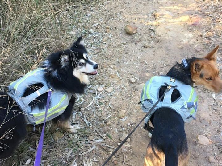 Ahsoka in her backpack during a hike